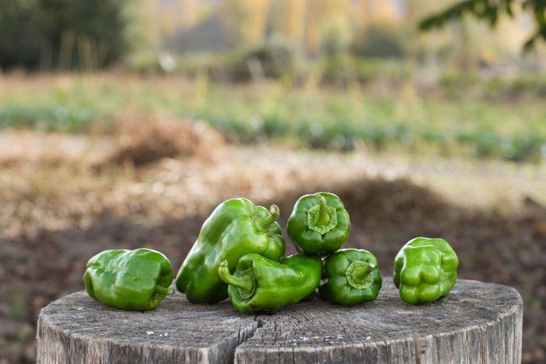 pimiento-verde-lamuyo