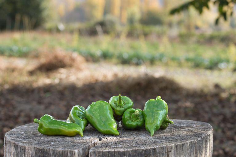 pimiento-verde-piquillo